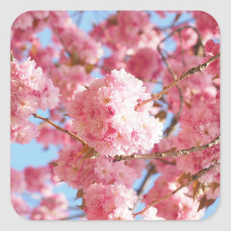 Pink Japanese Cherry Blossom Stickers