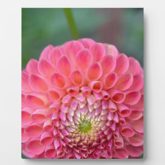 Pink Joy Plaque