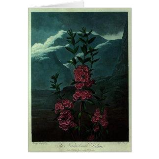 Pink Kalmia Card