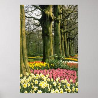 Pink Keukenhof Gardens, Holland flowers Poster