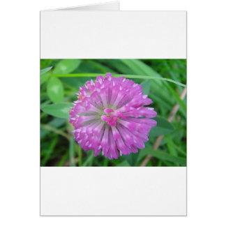 Pink Kleeblüte Card