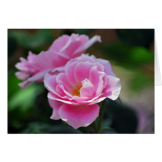 Pink lacy rose and meaning card