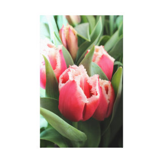 Pink Lacy Tulip Canvas Print