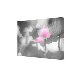 Pink Lady | Lotus Fairyland Photographic Art -4 Canvas Print