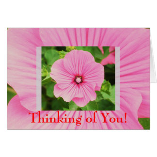 Pink Lavatera Flower Design Card