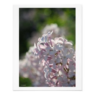 Pink Lilac Macro Wall Decor Photo Print