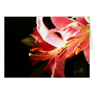 Pink Lilies Card