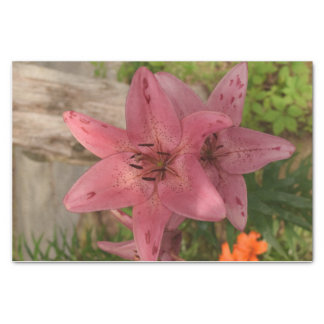 Pink Lily Tissue Paper