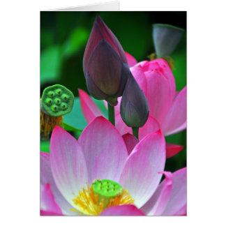 Pink Lotus Blossoms Card