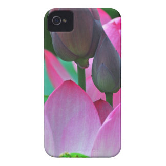 Pink Lotus Blossoms iPhone 4 Cover