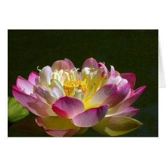 Pink Lotus Card