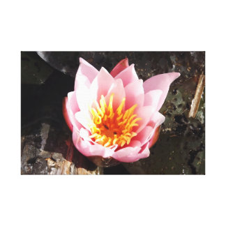 Pink Lotus Flower Stretched Canvas Print