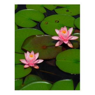 Pink lotus water lily flower  garden, postcard