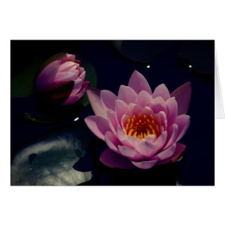 Pink Lotus Waterlilies Card