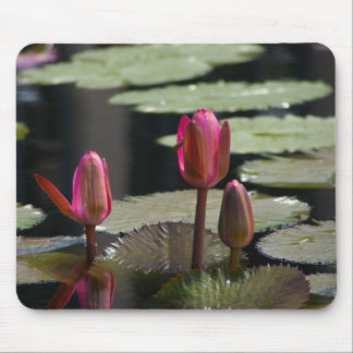 Pink Lotus Waterlilies Mouse Pad