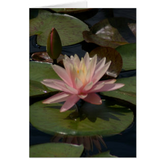Pink Lotus Waterlily Card