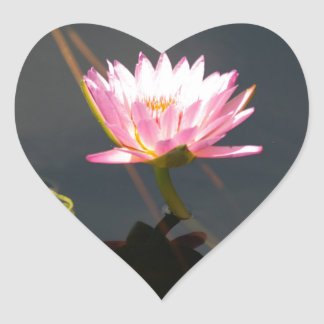 Pink Lotus Waterlily Heart Sticker