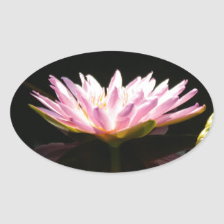 Pink Lotus Waterlily Oval Sticker