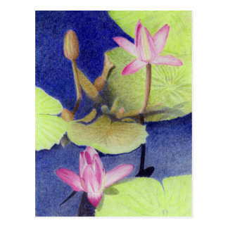 Pink Lotus Waterlily Postcard