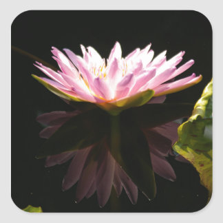 Pink Lotus Waterlily Square Sticker