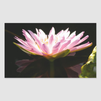 Pink Lotus Waterlily Sticker