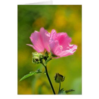 Pink Malva Pair Card