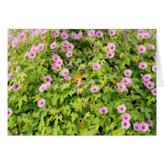 Pink Morning Glories Bush Card