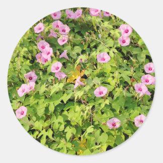 Pink Morning Glories Bush Classic Round Sticker