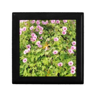Pink Morning Glories Bush Gift Box