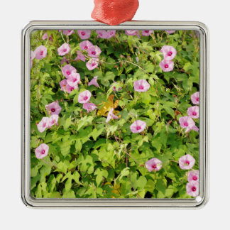 Pink Morning Glories Bush Silver-Colored Square Ornament