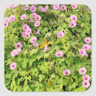 Pink Morning Glories Bush Square Sticker