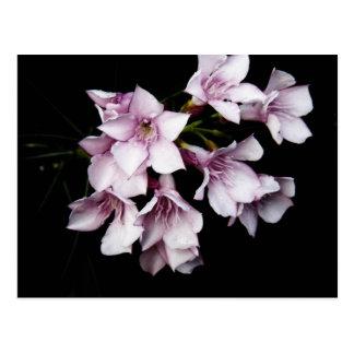 Pink Oleander Postcards