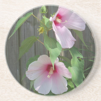 Pink on pink duo of hibiscus flowers coaster