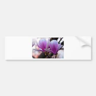 PINK ONE MAGNOLIA BUMPER STICKER