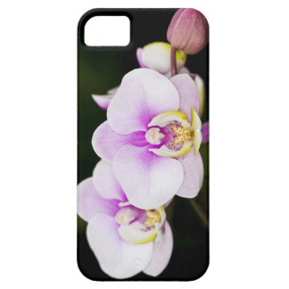 Pink Orchid iPhone 5 Cases