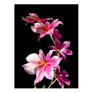 Pink Orchid Postcard