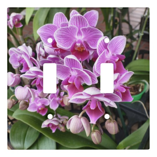 Pink Orchids Light Switch Cover