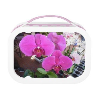 Pink Orchids Lunch Boxes
