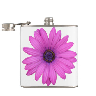 Pink Osteospermum and Transparent Background Hip Flask