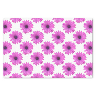 Pink Osteospermum and Transparent Background Tissue Paper