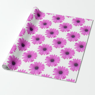 Pink Osteospermum and Transparent Background Wrapping Paper