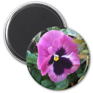 Pink Pansy Magnet