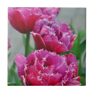 Pink parrot tulips tile