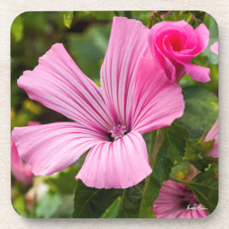 Pink passe-partout mounting flower with the dew of coaster