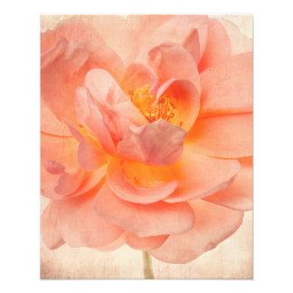 Pink Peach Rose Flower Floral Roses Flowers Stem Photo Art