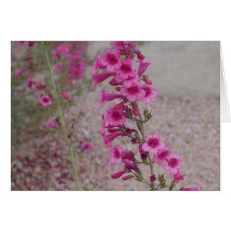 Pink Penstemons Card