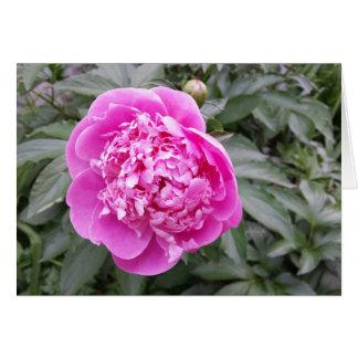 Pink Peonie Easter jjhelene 5x7 Greeting Card