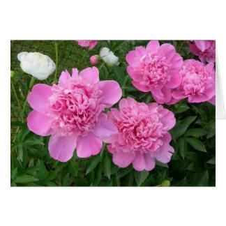 Pink Peonies Card