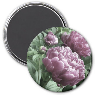Pink Peonies Magnets