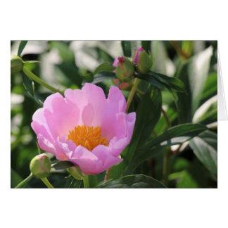 Pink Peony and buds Card